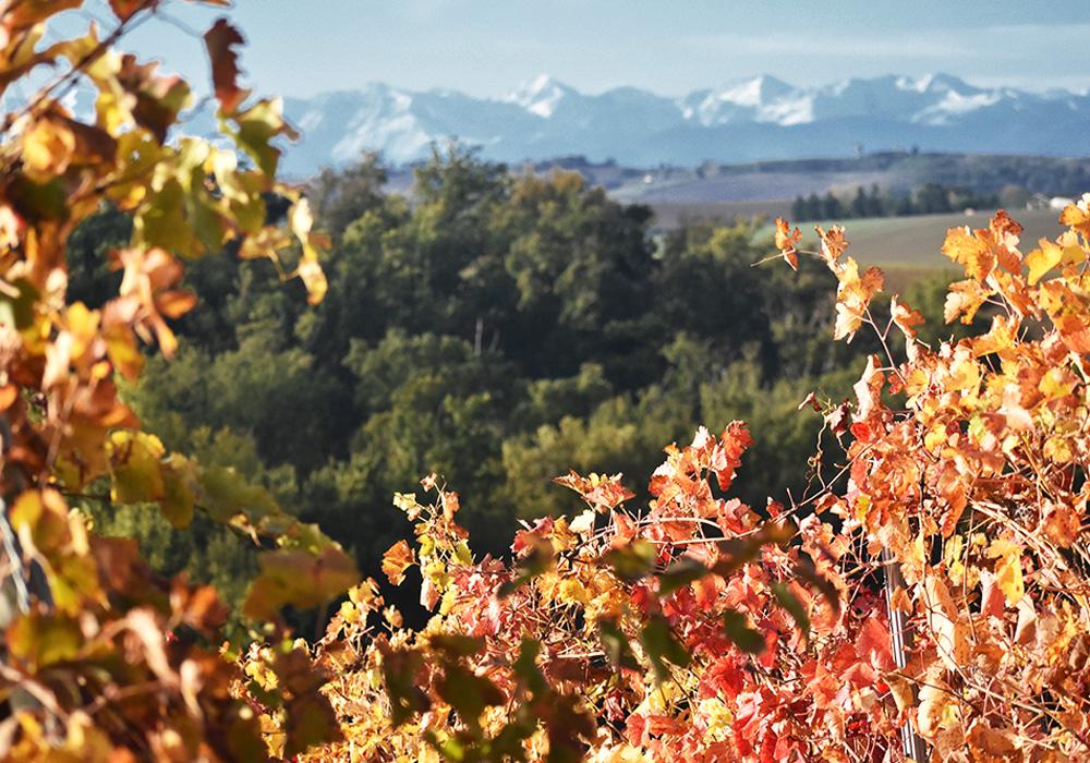 Les vignes du Domaine de Lastronques face aux Pyrénées en automne