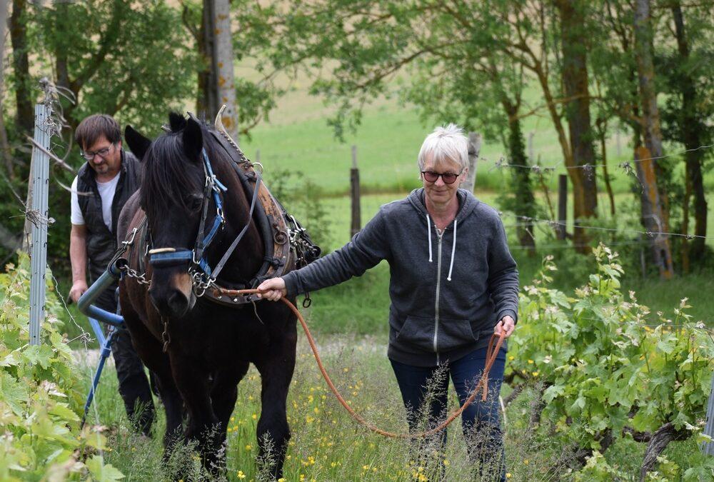 Traction animale au domaine de Lastronques en Ariège avec un cheval de Castillon